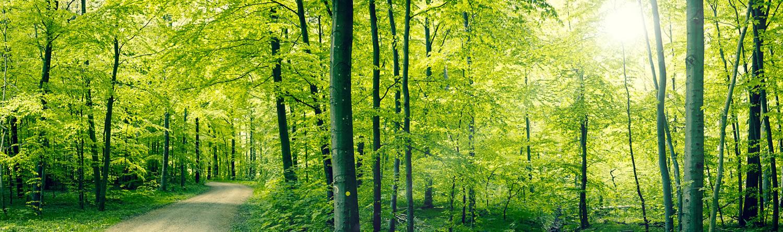 Weg durch den Frühlingswald