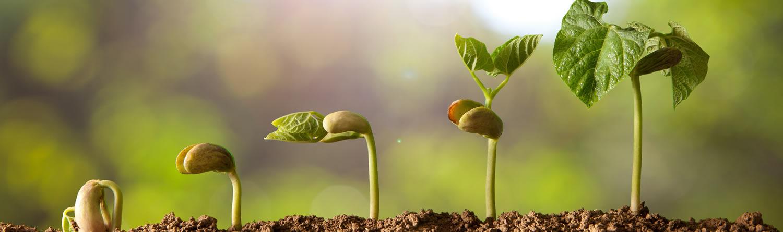 Samen sprießen