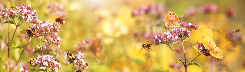 Bienen und Schmetterlinge auf rosa Blüten
